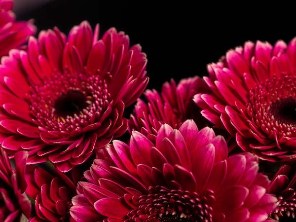Blumen Fehse